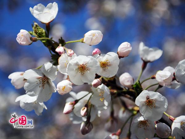Красивая пекинская весна