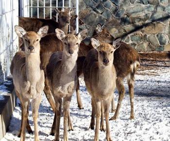 野生动物养殖基地建设项目