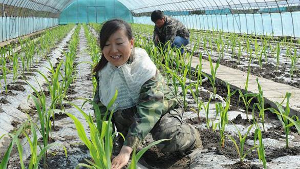 温室大棚种植经济效益