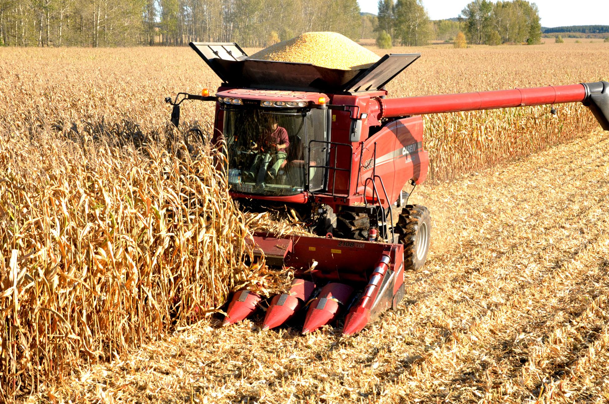 共青农场职工提早收粮效益增