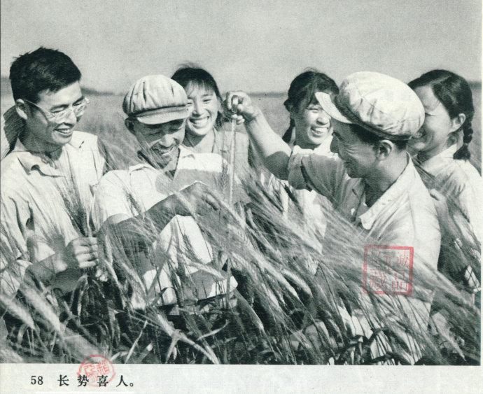 《知青老照片》_知青照片-东北网