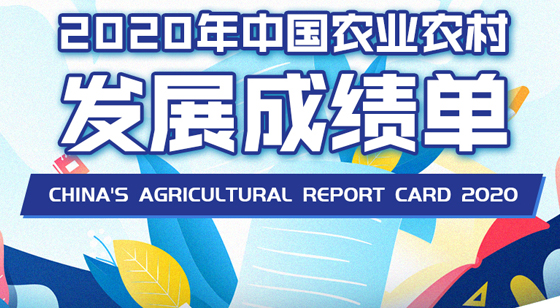 China's agricultural report card 2020